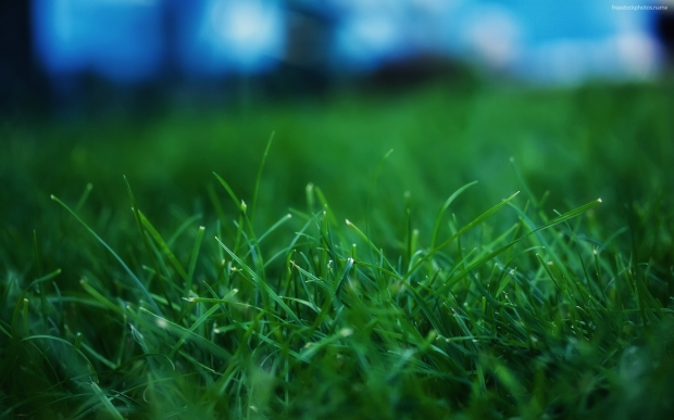 nature-green-grass-high-definition-90